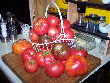 Now that's a pile of tomatoes. Imagine spaghetti sauce ...